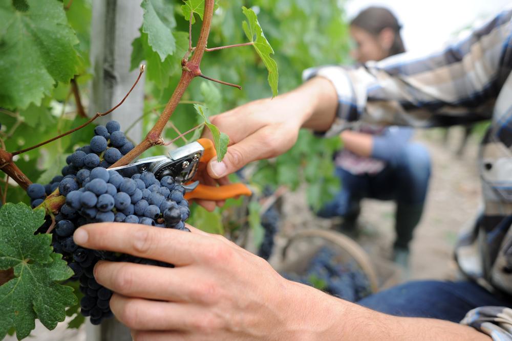 Nuevas tecnologías en Agricultura Riojana, cuida tu materia prima. Control de parcelas, riego y fitosanitarios.